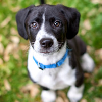 DC rescue spaniel mix