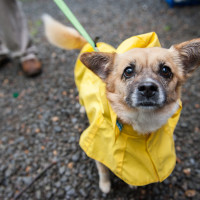 mutt dog in a raincoat
