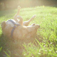 Mutt laying in grass with sunlight