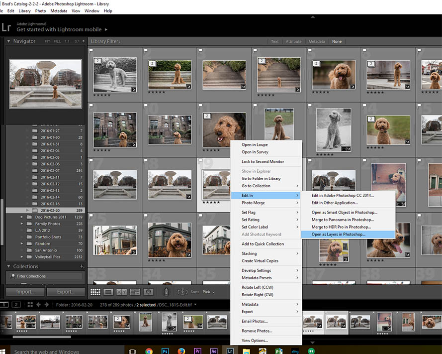 lightroom dog photography secrets
